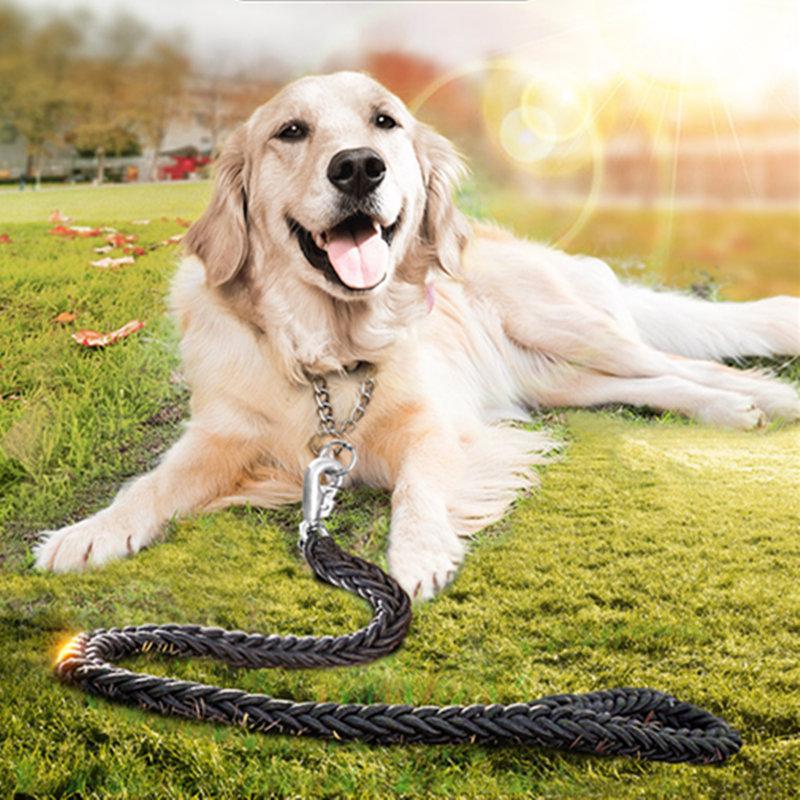 wie golden retriever hunden zu trainieren, trainieren wie golden retri